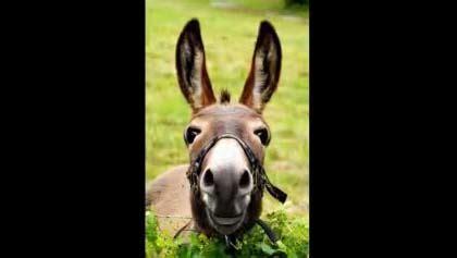 donkey birthday greeting  friend    friends