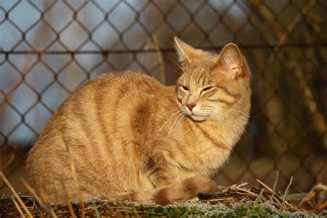 picture yellow cat cute portrait animal pet