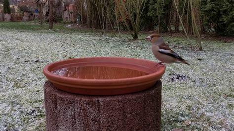 vogeltränke selber bauen frostgesch 252 tzte vogeltr 228 nke selber bauen
