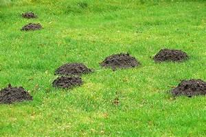 Was Fressen Maulwürfe : tipps gegen maulw rfe im garten husmann blog ~ Buech-reservation.com Haus und Dekorationen