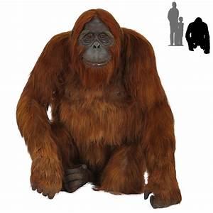 R-015 Orangutan with real hair PROTHEME GLOBAL