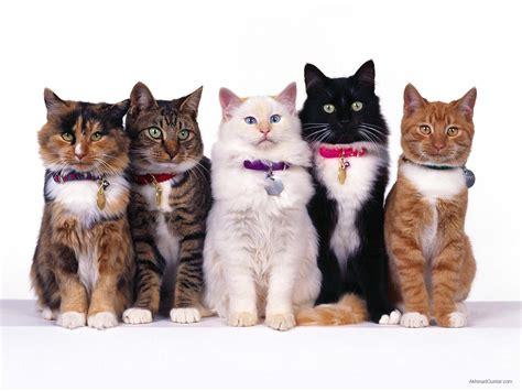 perawatan kucing tips mudah  merawat kucing