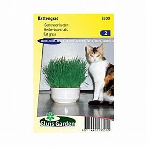 Graine Herbe A Chat : herbe chat m lange de gramin s ~ Melissatoandfro.com Idées de Décoration