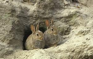 Rabbiting Shooting Uk