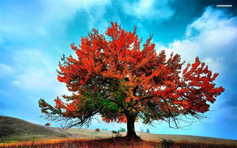 Beautiful Autumn Trees Wallpapers by Autumn Tree Wallpaper 61 Images