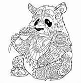 Panda Colorear Adultos Pandas Animales sketch template