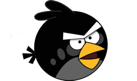 meet  real angry bird nature news expresscouk