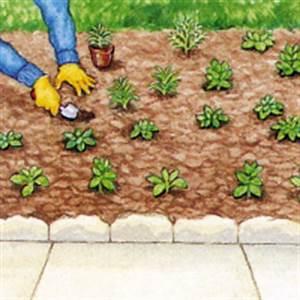 Mulchen Mit Grasschnitt : beet mit regenbogenfarben mit einj hrigen pflanzen ~ Lizthompson.info Haus und Dekorationen