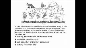 Food Web Skills - Labeling Food Webs