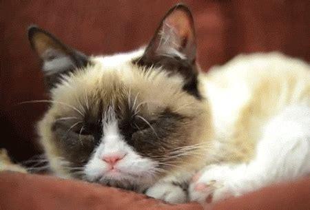 grumpy cat gif  internet cat video festival find
