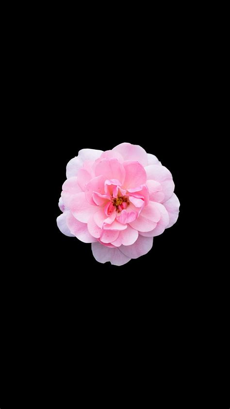 Flower Iphone Black Background Wallpaper by Iphone Flower Wallpaper Iphone Wall In 2019 Apple