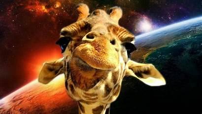 Giraffe Space Wallpapers Neon Exploration Giraffes Facts
