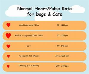 How To Check Heart Rate Pulse In Dogs Cats Miss