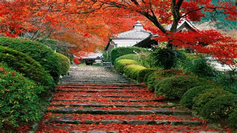 japan landscape fall cherry trees stairs leaves