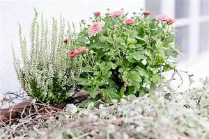 Garten Im September : mein garten im september pomponetti ~ Whattoseeinmadrid.com Haus und Dekorationen