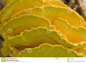 Holz Wachsen Bienenwachs : holz wachsen pilzartig stockfoto bild von farbe wachsen 10979462 ~ Orissabook.com Haus und Dekorationen