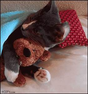 Cutest cat gif ever - GIF on Imgur