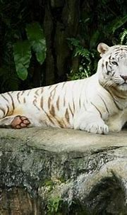 Uniquely Singapore: Welcome to Singapore Zoo