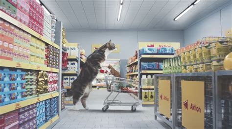 crazy supermarket ad full  cats  give