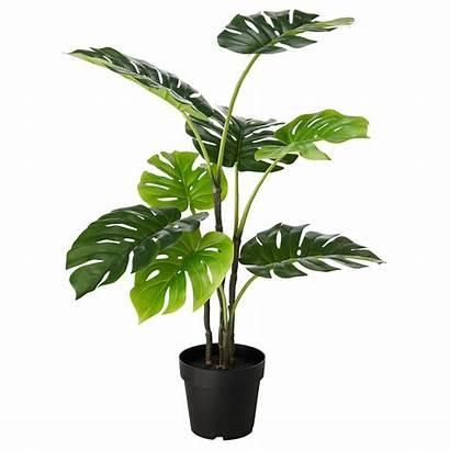 Plant Potted Artificial Ikea Indoor Monstera Outdoor