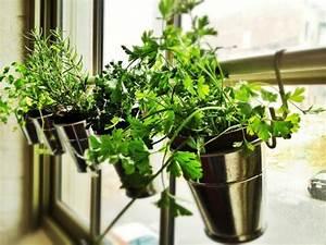 Kräutertöpfe In Der Küche : kr uterpflanzen immer friche kr uter handgreifbar zu hause haben ~ Sanjose-hotels-ca.com Haus und Dekorationen