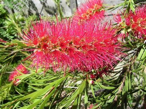 fiori per il giardino i fiori da giardino piante per giardino fiori esterno
