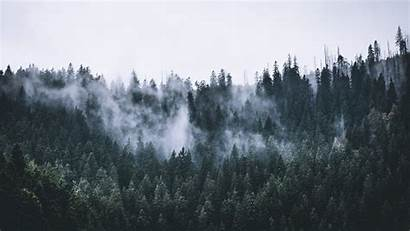 Forest Fog Nature Dawn Trees Background 5k