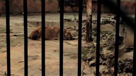 animal zoo cruelty english fo