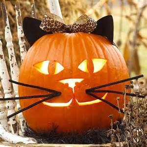 pumpkin for cats best 25 cat pumpkin ideas on cat pumpkin