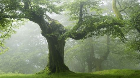 The Most Beautiful Forest Wallpapers (download