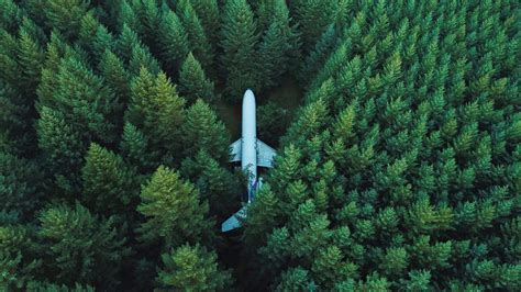 nature landscape trees forest wreck aerial view