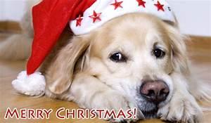 Weihnachtskarten Mit Foto Kostenlos Ausdrucken : weihnachtskarten online verschicken ~ Haus.voiturepedia.club Haus und Dekorationen