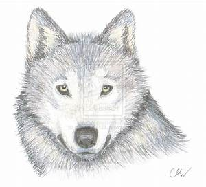 Wolf Drawings Images - Reverse Search