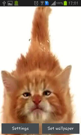 Descargar Cat Licking Screen Para Android Gratis El Fondo