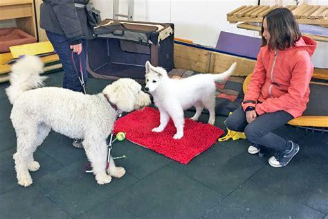 hundeschule bobingen hundetraining fuer welpen