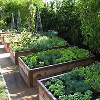 raised vegetable garden Advice for Raised Bed Vegetable Growers