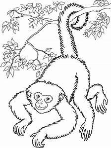 Realistic Rainforest Monkey Clipart - Clipart Suggest