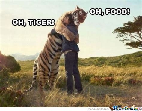 Tiger Memes - tigers memes best collection of funny tigers pictures