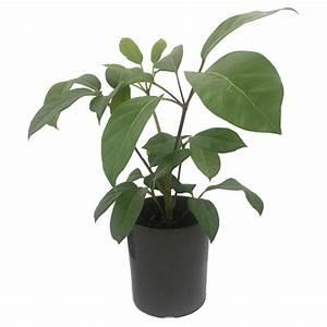 170mm, Decorative, Indoor, Plants
