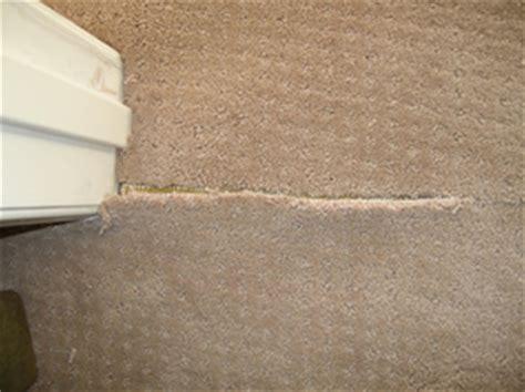 carpet cleaning gold coast carpet repairs and