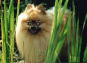 Early Symptoms Of Cataracts In Dogs