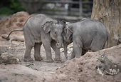 Chester Zoo: Q&A with the Elephant Keeper - Sykes Cottages ...