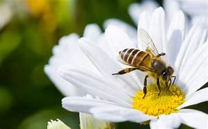 Getting The Facts On Pollination