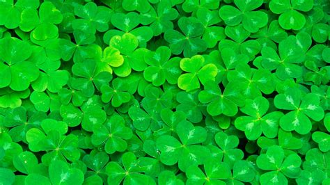 Clover Background Clover Hd Wallpaper And Background Image 1920x1080