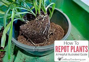 How To Repot Plants  A Helpful Illustrated Guide