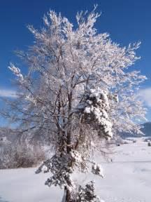 martens reedsburg true value hardware winter tree shrub care tips