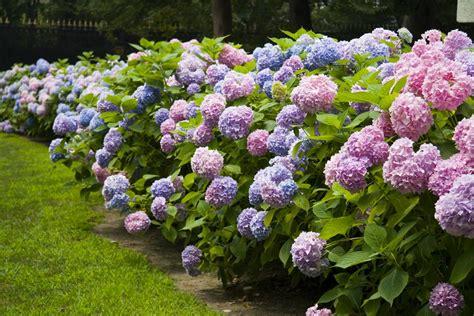 Flowering Shrubs That Grow In Shade