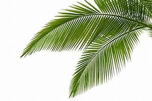 Palm Leaf Themed Tropical Home Decor