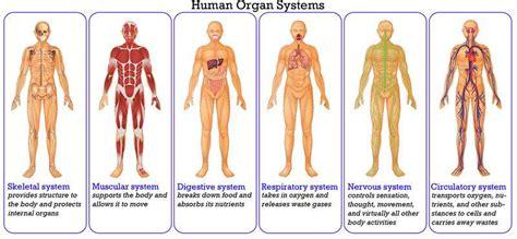 villas  gd science class human body organ system