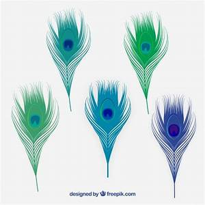 Peacock Feather Vectors, Photos and PSD files | Free Download